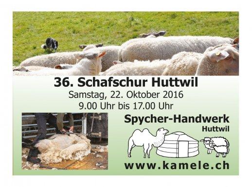 A6_Schafschur_2016_2.jpg