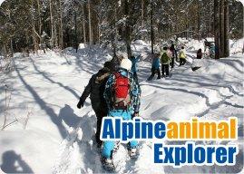 Alpine_Animal_Explorers.jpg