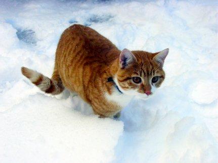 Ginger_12.jpg