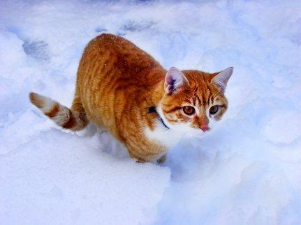 Ginger_5.jpg