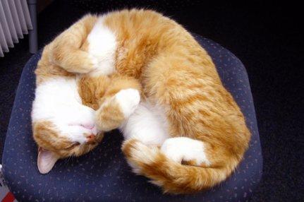 Ginger_6.jpg