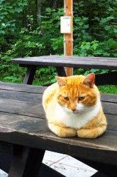 Ginger_7.jpg